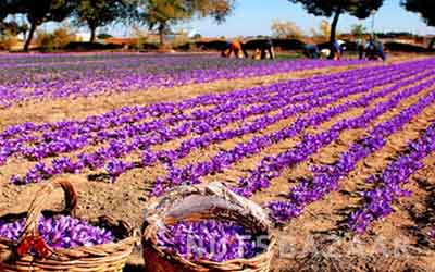 kernelo nutskala saffron wholesale bazaar price iran negin