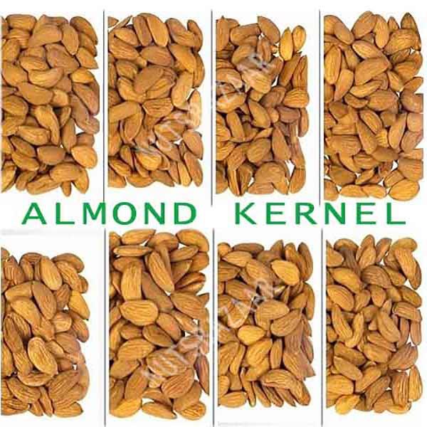 Mamra kernelo nutskala nuts bazaar wholesale