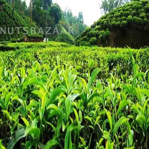 nuts bazaar kernelo organic price black tea wholesale kernelo nutskala grading