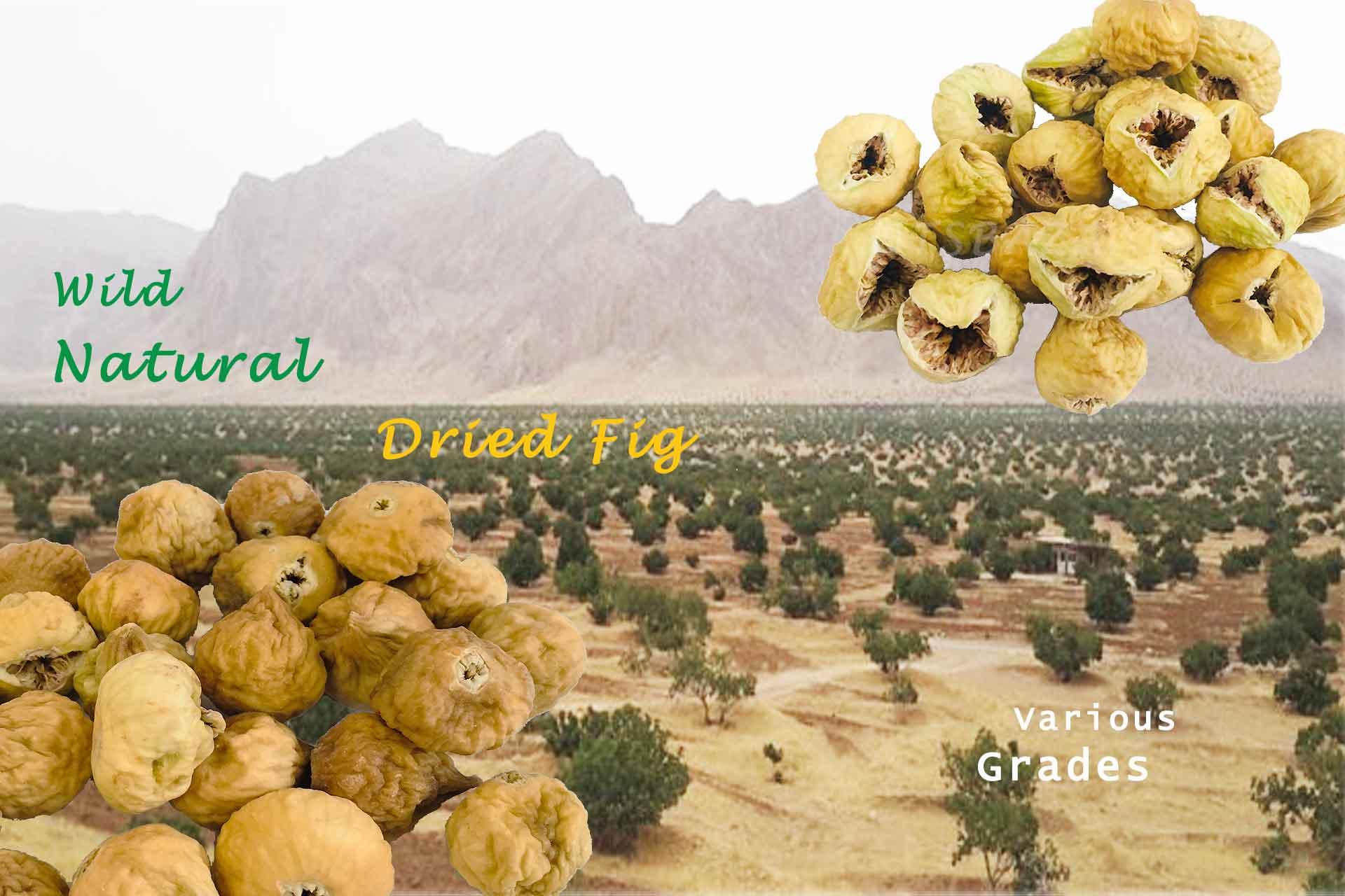 kernelo nutskala DriedFig wild natural bazaar wholesale price