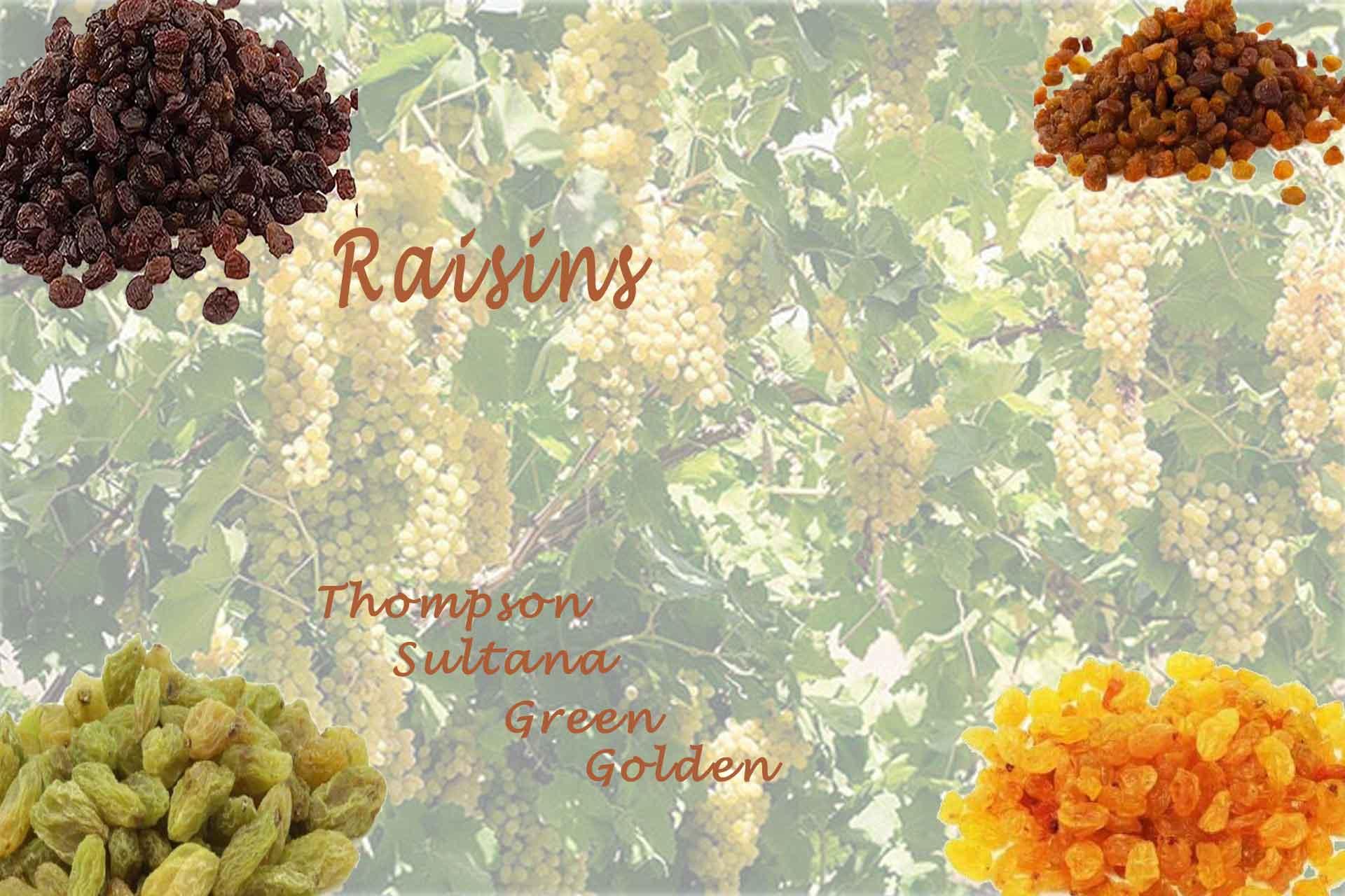 kernelo nutskala Raisin thompaon sultana bazaar wholesale price